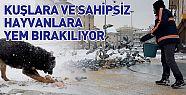 Konya'da kış günü kuşlar ve hayvanlar unutulmadı