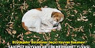 Konya'da Sahipsiz Hayvanlar İçin Merhamet...