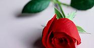 Sevgi güzel, sevmesini bilene, sevgiye değer verene