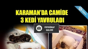 KARAMANDA CAMİDE 3 KEDİ YAVRULADI